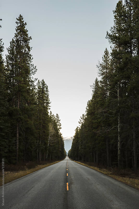 Road lined with trees by Shaun Robinson for Stocksy United