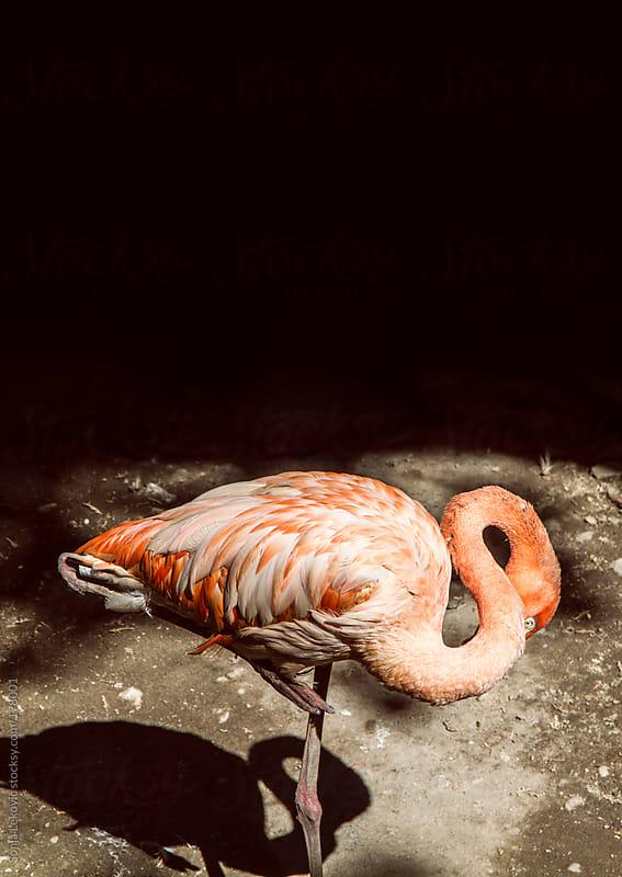 pink flamingo by Sonja Lekovic for Stocksy United