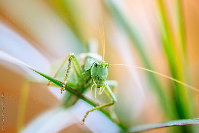 grasshopper macro by Peter Wey for Stocksy United