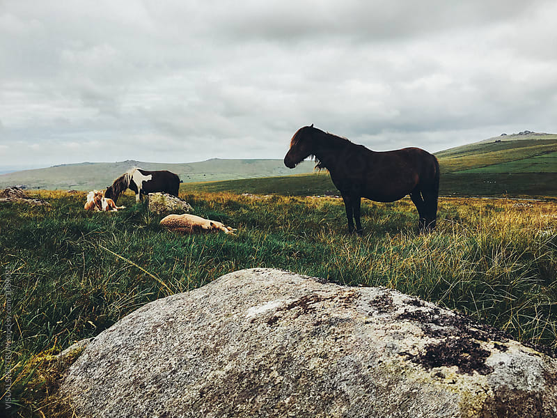 Four Horses in Beautiful Pristine Landscape (Dartmoor National Park, Devon, England) by VISUALSPECTRUM for Stocksy United