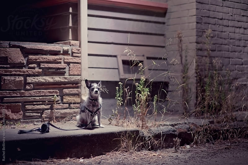 Small dog alone in cold night time yard by Rachel Bellinsky for Stocksy United