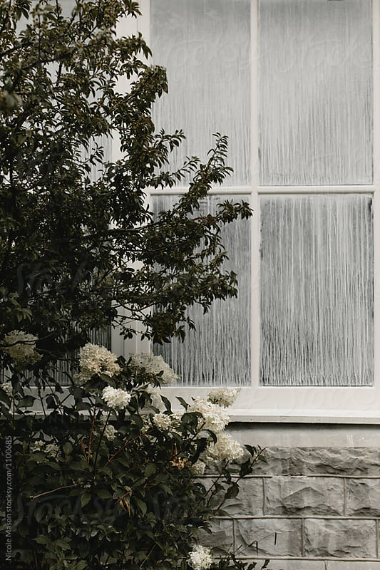 flower bush outside white windows by Nicole Mason for Stocksy United
