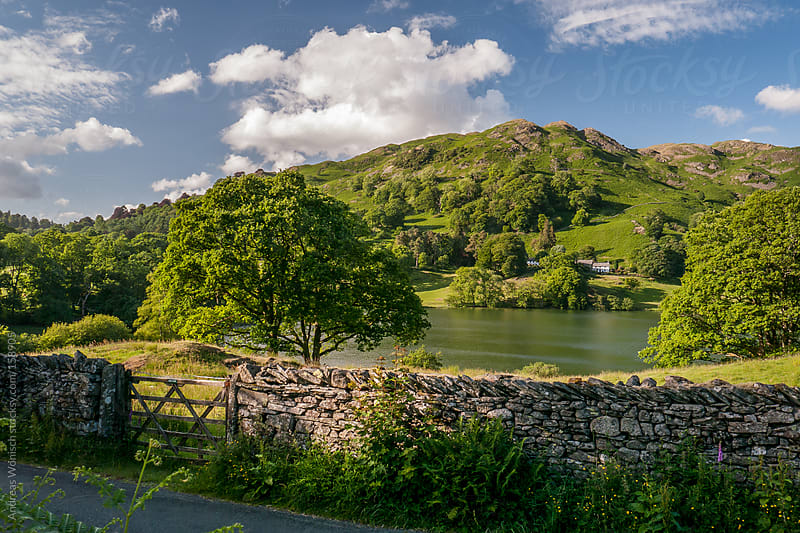 Idyllic Scenery with Tree, Lake and Hills by Andreas Wonisch for Stocksy United
