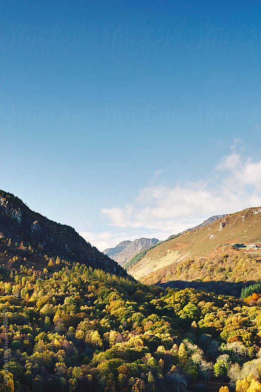 Autumnal trees in the valley. Trefriw, Carneddau, Wales, UK. by Liam Grant for Stocksy United
