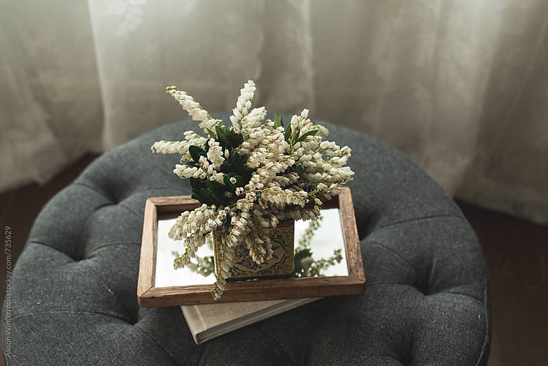 Pieris Japonica On Top Of A Mirrored Tray by Alison Winterroth for Stocksy United