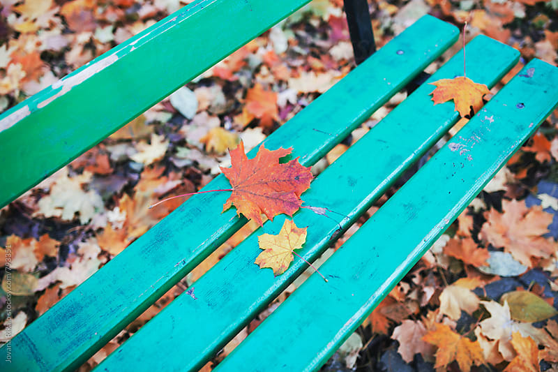 Leaves on a bench by Jovana Rikalo for Stocksy United