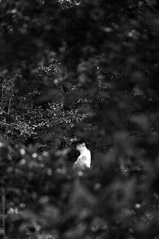 Cat seen amongst shrub branches while sitting on bench in garden by Laura Stolfi for Stocksy United