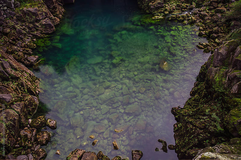 Pond with Emerald water by Andrey Pavlov for Stocksy United