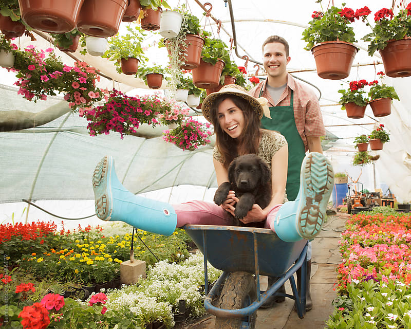 Florists Riding in a Wheelbarrow at Work by Lumina for Stocksy United