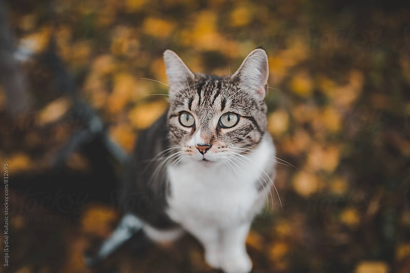 Adorable big eyed and mixed race cat looking near the camera by Sanja (Lydia) Kulusic for Stocksy United