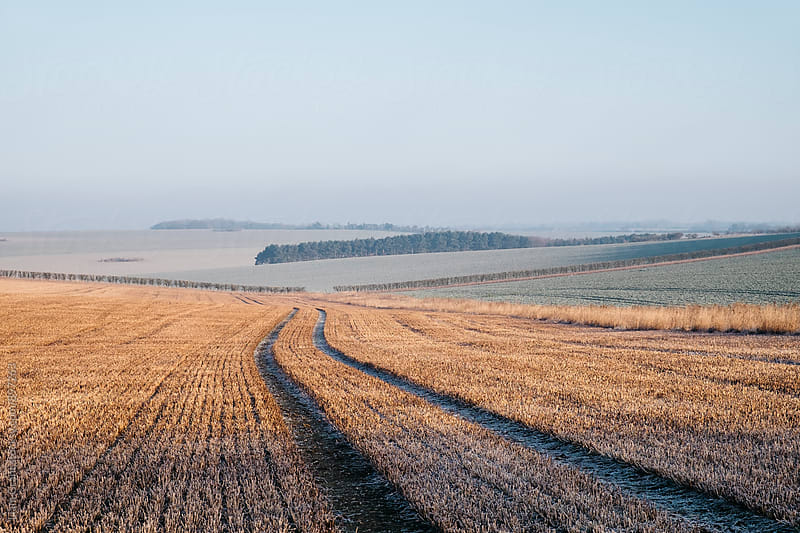 Tracks through a frost covered stubble field at sunrise. Norfolk, UK. by Liam Grant for Stocksy United