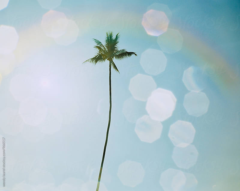water and sky and lone palm tree with rainbow by wendy laurel for Stocksy United