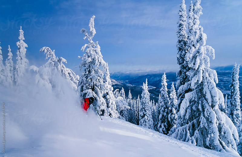 Man tree skiing powder snow in winter mountains of Red Mountain, by Soren Egeberg for Stocksy United