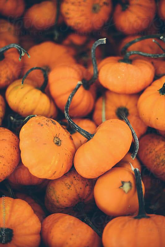 Mini Pumpkins Galore by Tina Crespo for Stocksy United