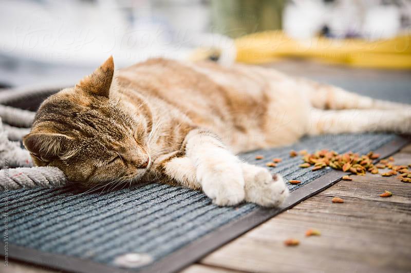 sleepy orange tabby 2 by Samantha Wesselhoft for Stocksy United