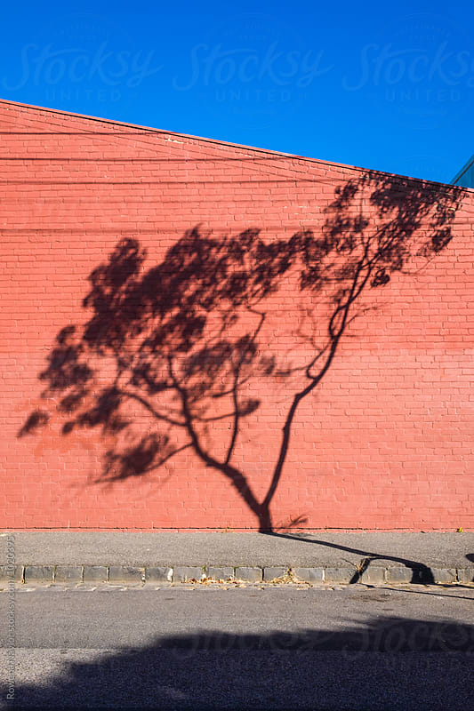 Shadow of Gum Tree in harsh Australian light by Rowena Naylor for Stocksy United