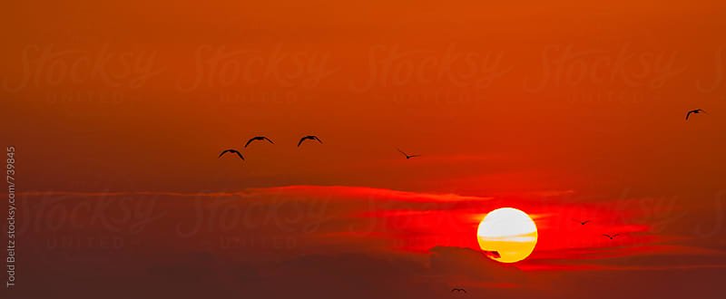 Birds in flight at sunset by Todd Beltz for Stocksy United