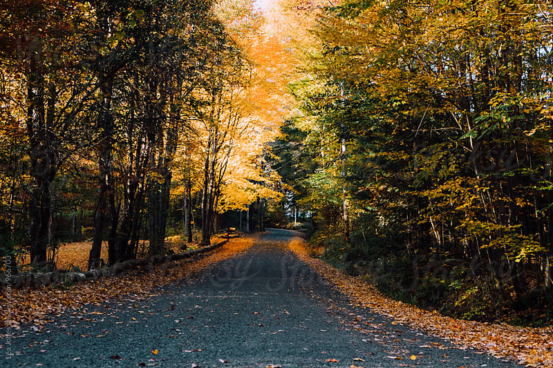 country road in the fall by Léa Jones for Stocksy United