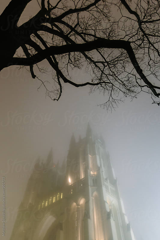 Cathedral church steeple rising in fog with tree branches at night by Matthew Spaulding for Stocksy United