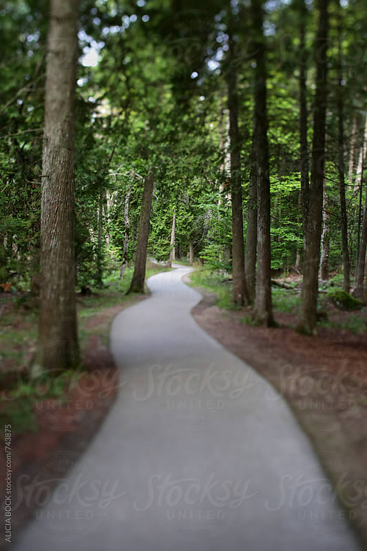 A Winding Path Through A Forest by ALICIA BOCK for Stocksy United