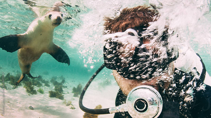 Scuba diving with Australian Sealion by Robert Lang for Stocksy United