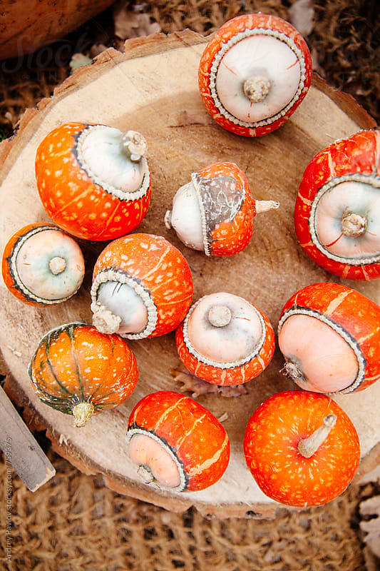 Unusual small red pumpkins by Andrey Pavlov for Stocksy United