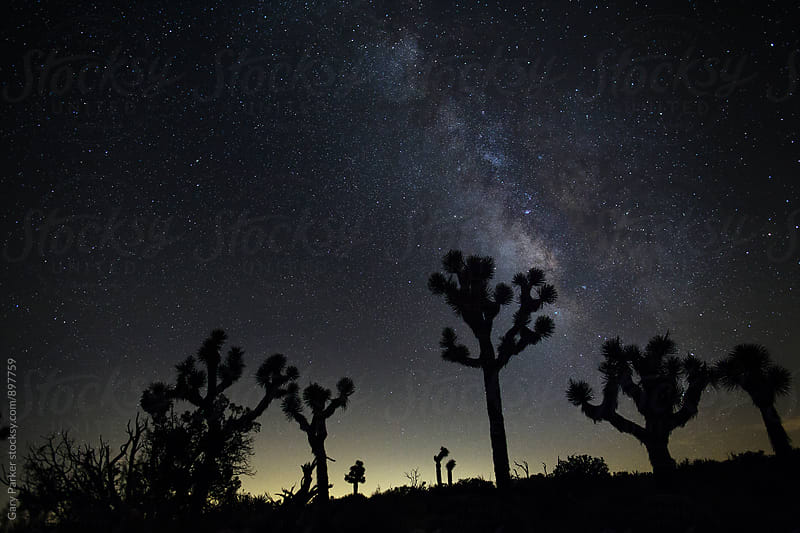 Joshua Trees silhouetted against a star night sky by Gary Parker for Stocksy United
