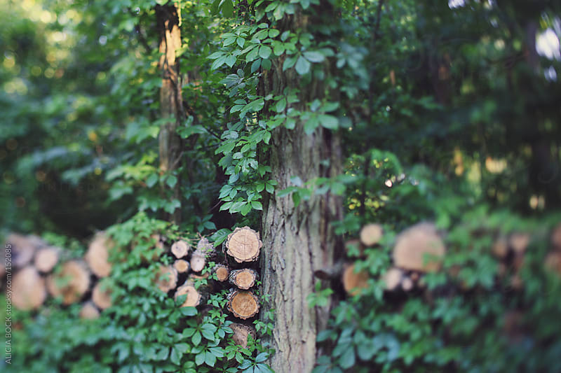 Fire Wood and Vines #2 by ALICIA BOCK for Stocksy United