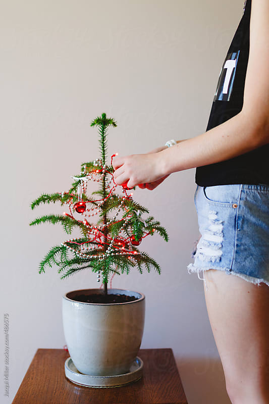 Girl decorating a small Norfolk Island Pine Tree for Christmas - vertical by Jacqui Miller for Stocksy United