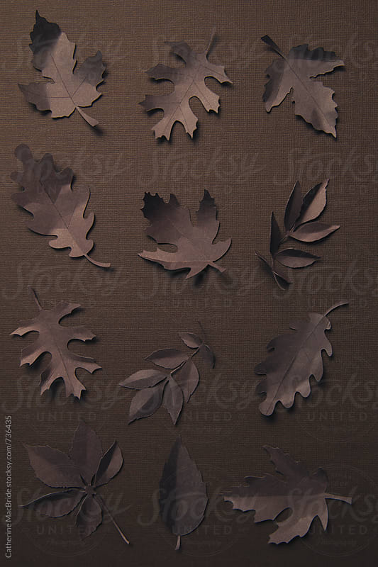 Paper leaves on a textured paper background... by Catherine MacBride for Stocksy United
