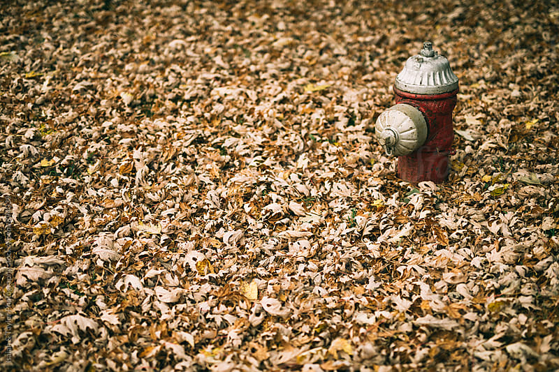 Fire Hydrant in Fall by Isaiah & Taylor Photography for Stocksy United