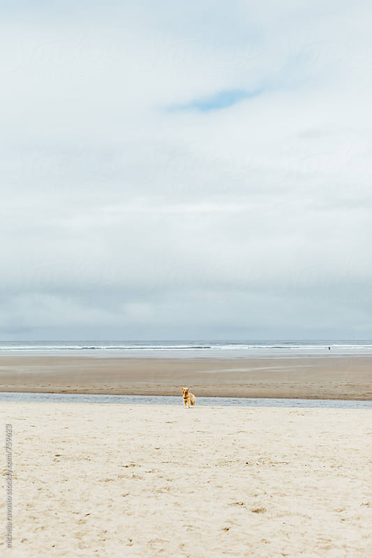 Dog standing on the beach by michela ravasio for Stocksy United