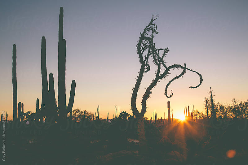 Magical desert landscape as the sun goes down in Mexico by Gary Parker for Stocksy United