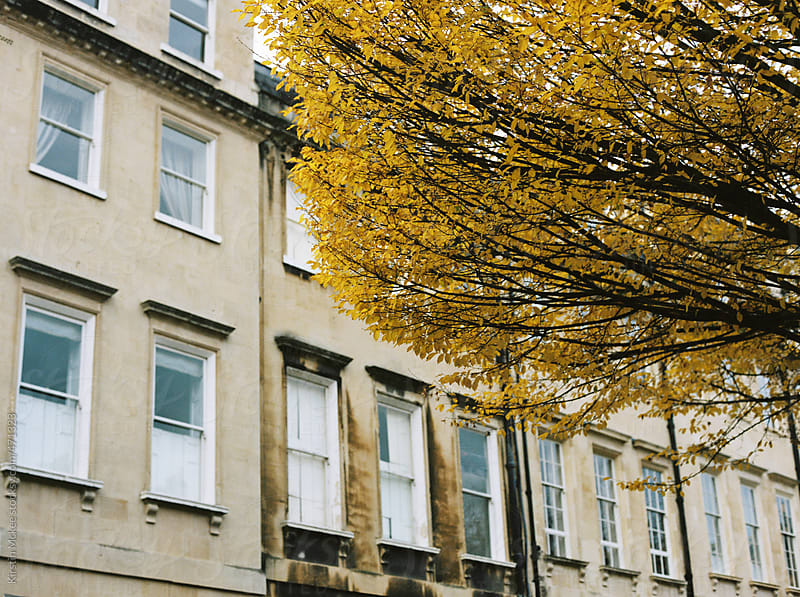 Buildings in Bath with autumnal tree in the foreground by Kirstin Mckee for Stocksy United