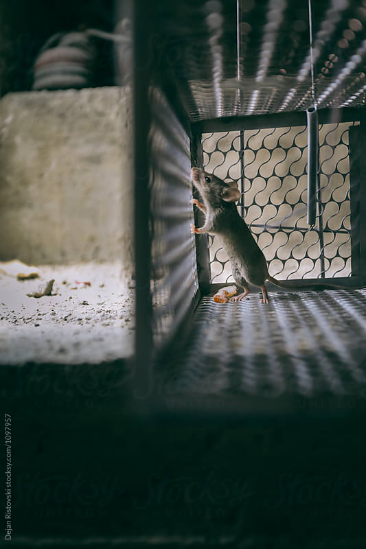 Mice looking at the freedom. by Dejan Ristovski for Stocksy United