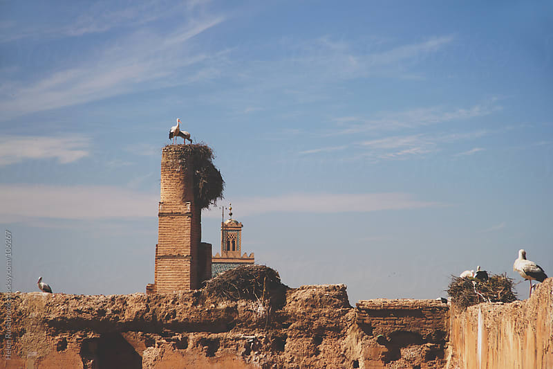 Storks nesting on the ramparts of a ruined building by Helen Rushbrook for Stocksy United