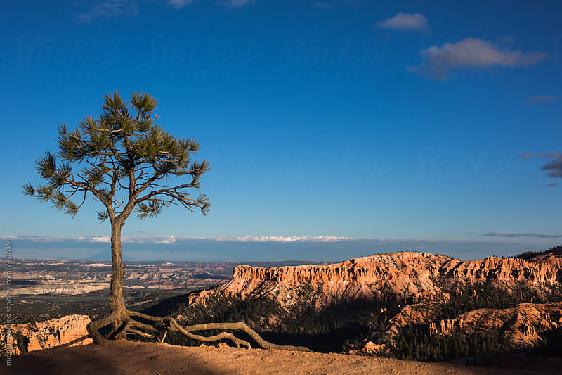 Tree in Bryce Canyon National Park at sunset by michela ravasio for Stocksy United