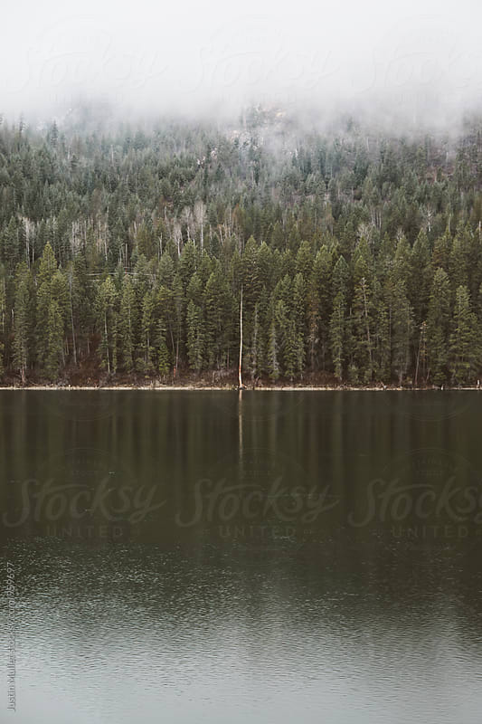 Thick fog above a river in the northwest.  by Justin Mullet for Stocksy United