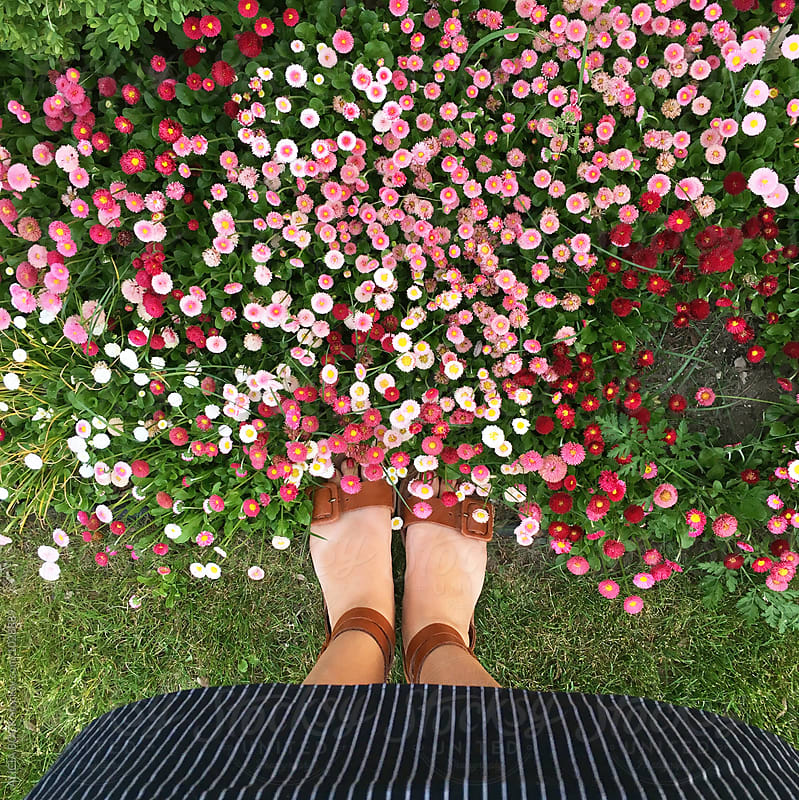 A Woman Looking Down Over English Daisy Flowers Growing In A Garden by ALICIA BOCK for Stocksy United