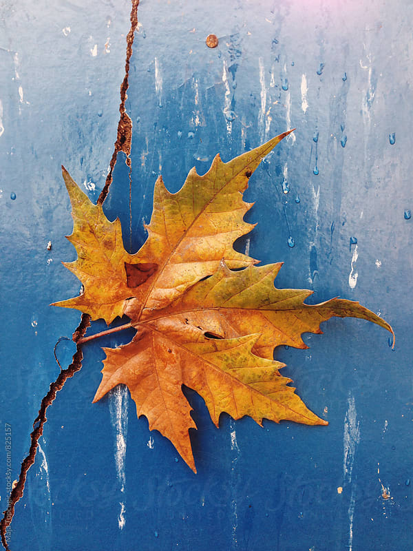 A big leaf in autumn colors against a cracked blue background by Maja Topcagic for Stocksy United