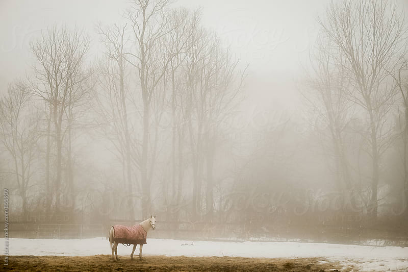 Horse standing in the mist by Léa Jones for Stocksy United