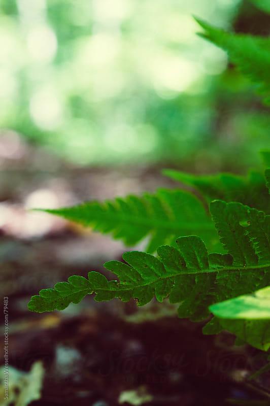fern on forest path by Samantha Wesselhoft for Stocksy United