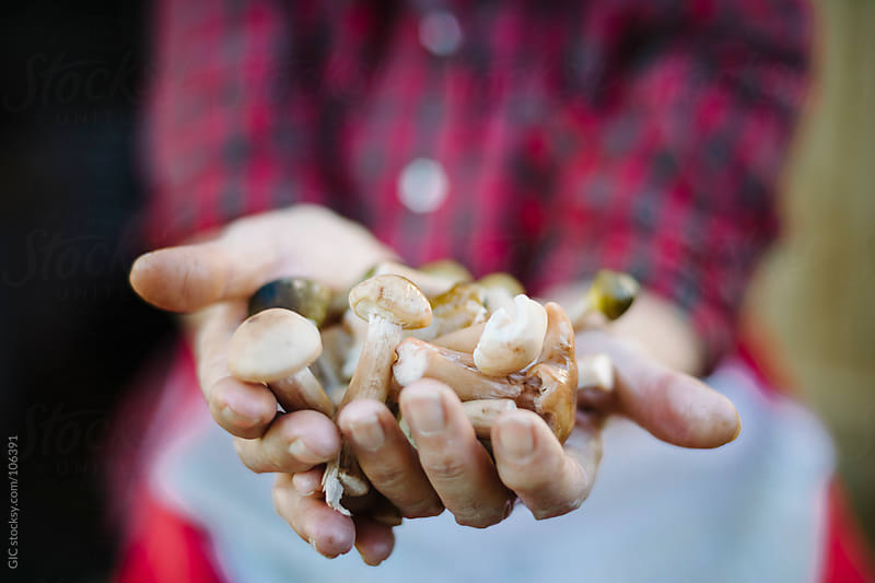 Hands holding fresh Mushrooms by GIC for Stocksy United