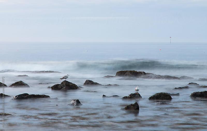 Gulls on rocks in tidal surf on Maine ocean coast by Matthew Spaulding for Stocksy United