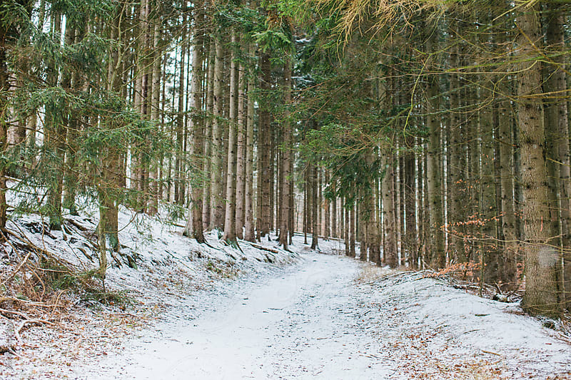 Path leading through snowy winter forest by Zocky for Stocksy United