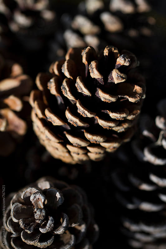 Pinecones by Dobránska Renáta for Stocksy United