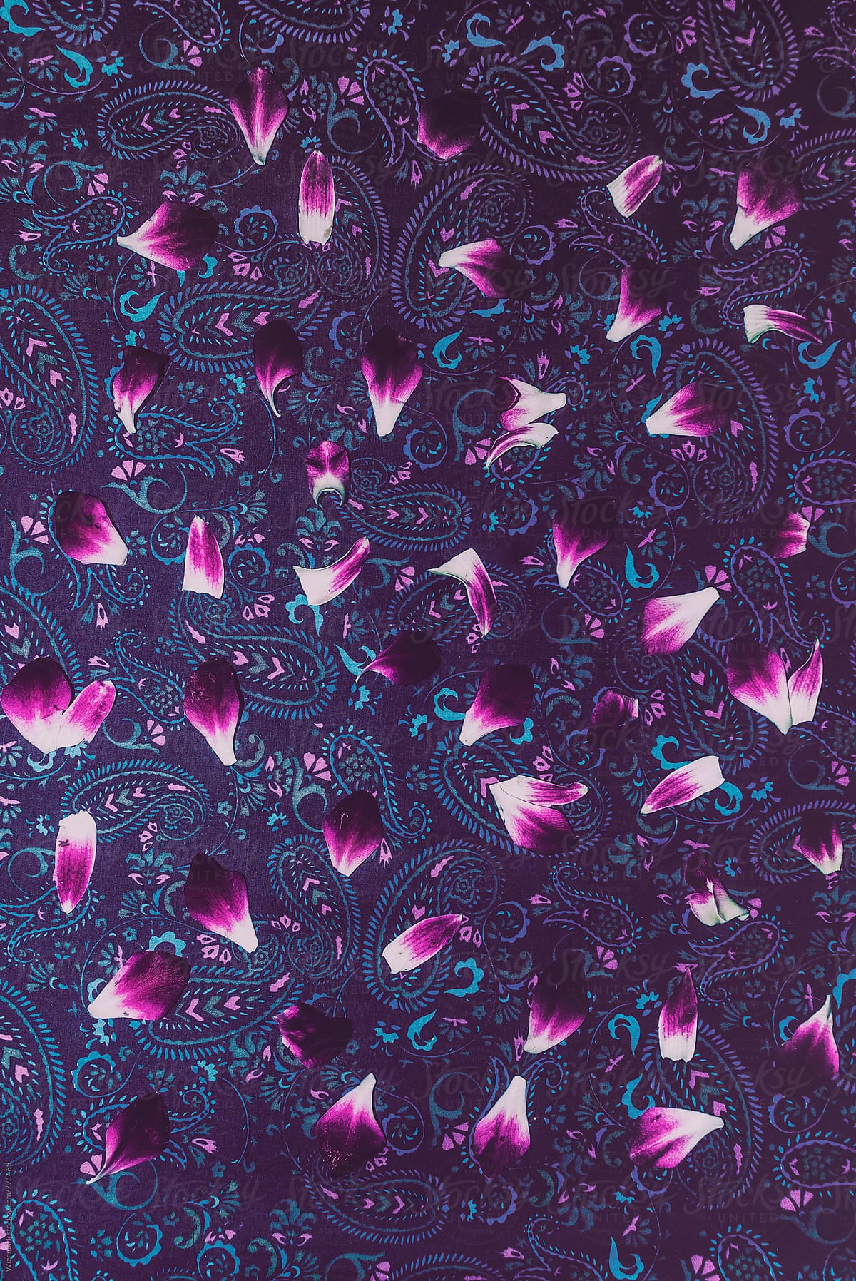 Bright vibrant vivid pinkpurple flower petals pattern on a bright vibrant vivid pinkpurple flower petals pattern on a striking purple paisley mightylinksfo