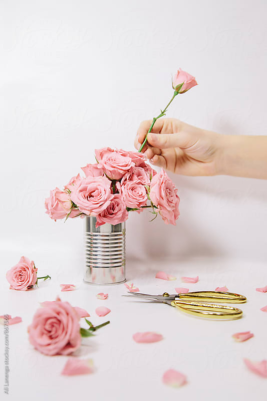 Pink Roses by Ali Lanenga for Stocksy United