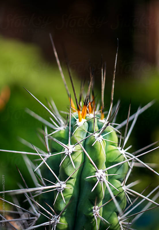 Cactus. by IDS Photography for Stocksy United