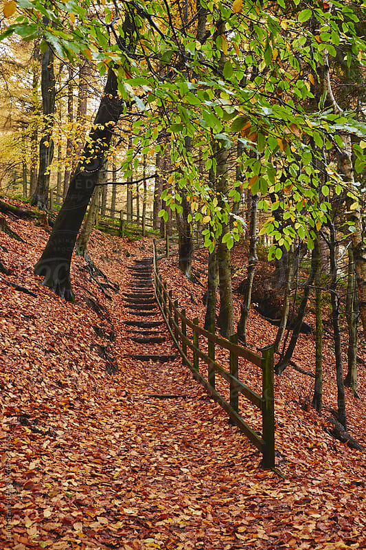 Steps through autumnal woodland. Derbyshire, UK. by Liam Grant for Stocksy United